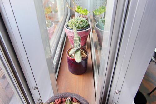 二重窓の隙間を上手く利用した簡易の温室には小さなグリーンがたくさん並ぶ。